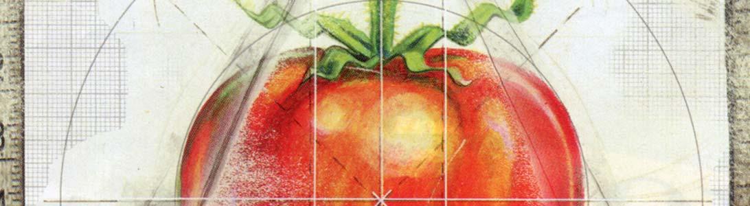 magazine illustration of genetically engineered tomato