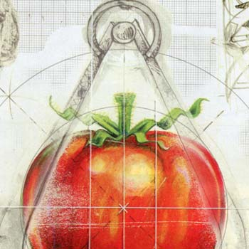 preview of magazine illustration of genetically engineered tomato food