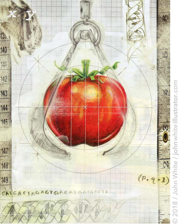magazine illustration of genetically engineered tomato