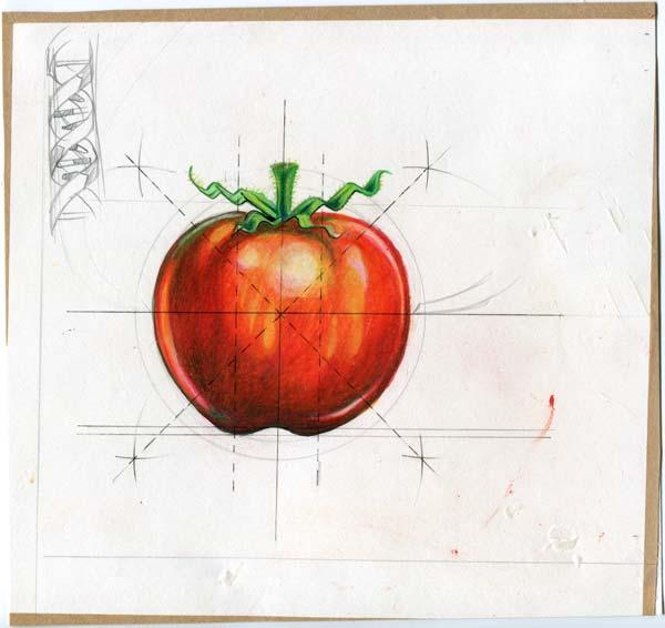 tomato illustration magazine
