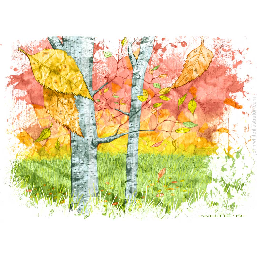 painted drawn illustration of silver birch trees