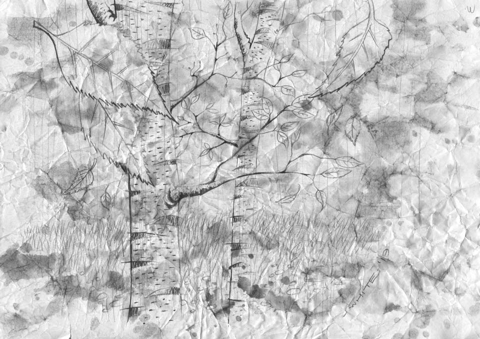 painted drawn illustration of silver birch trees black and white