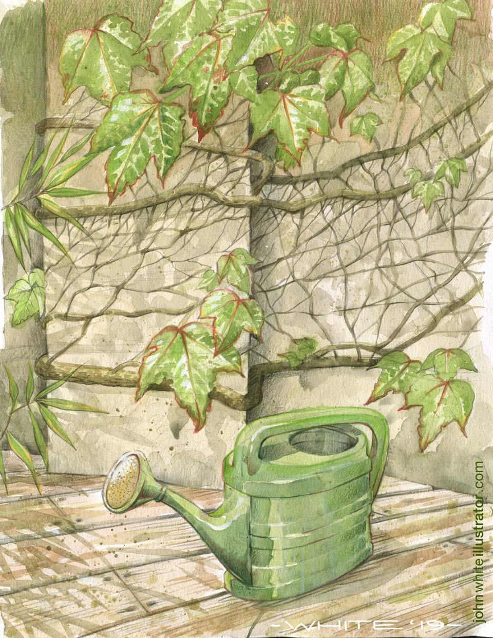 watercolour painting of boston ivy