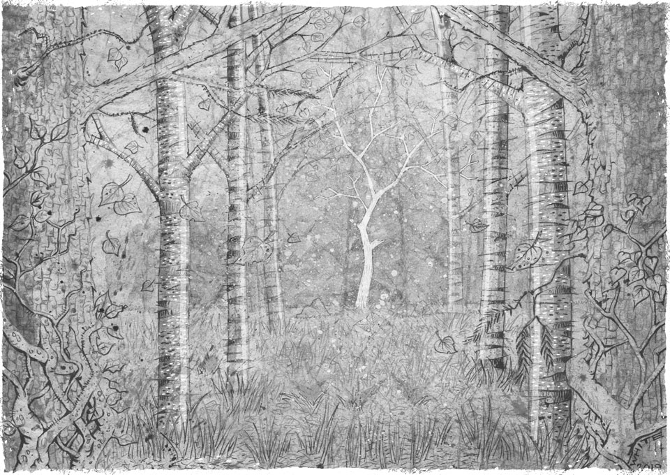 illustration of woodland with pine ash and silver birch