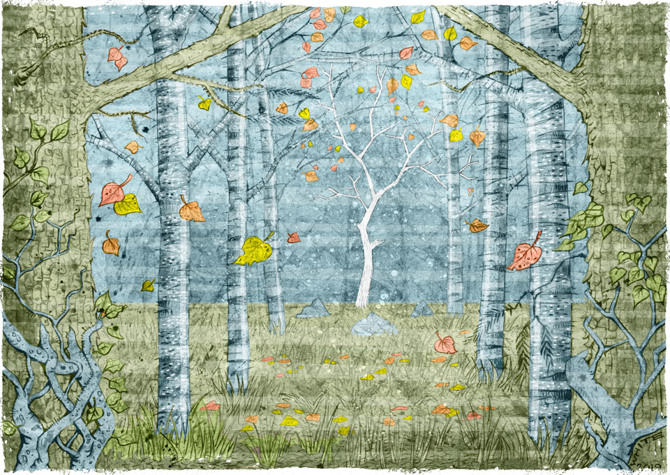 colour illustration of woodland with pine ash and silver birch